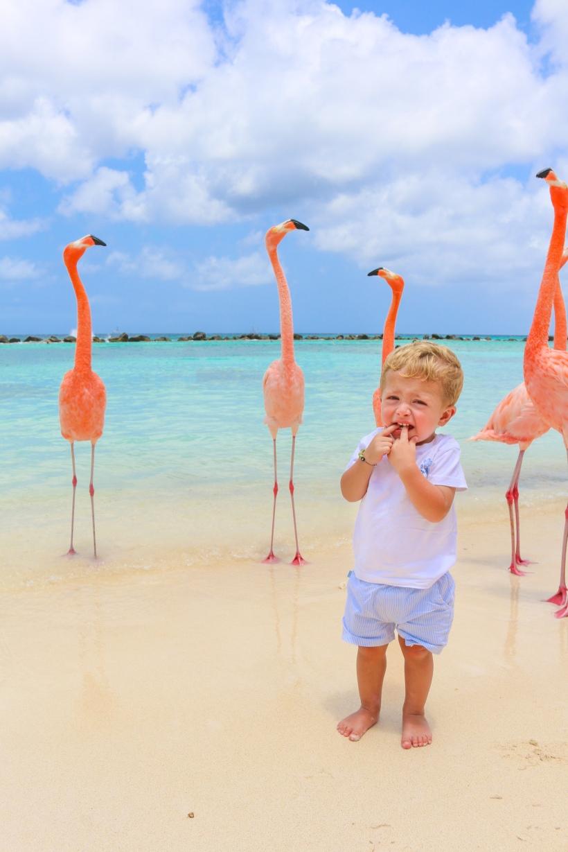 Flamingo Benjamin by Steve Francees